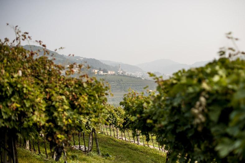 valpolicella-panorama